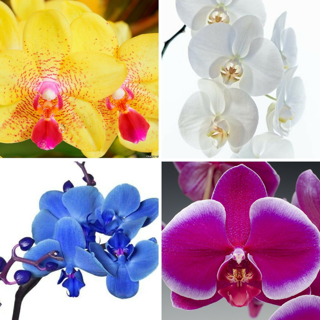 orchid planter orchids delivery houston florist 2