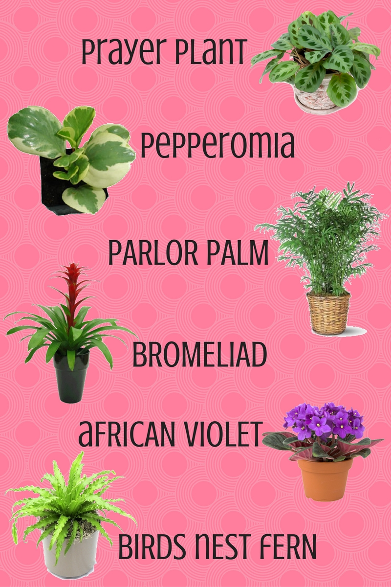 top 6 house plants safe for cats and dogs